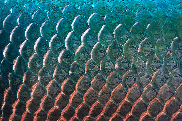 fish scale texture for background, colorful concept - animal markings stock photos and pictures