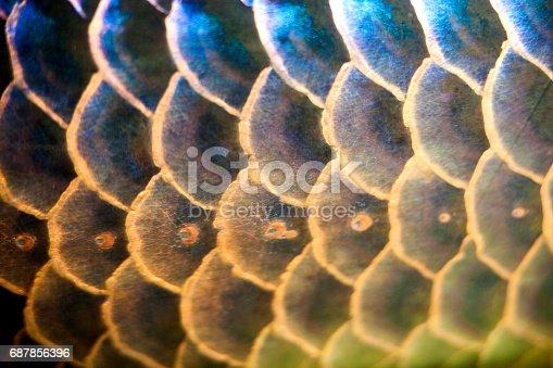 istock Fish Scales 687856396