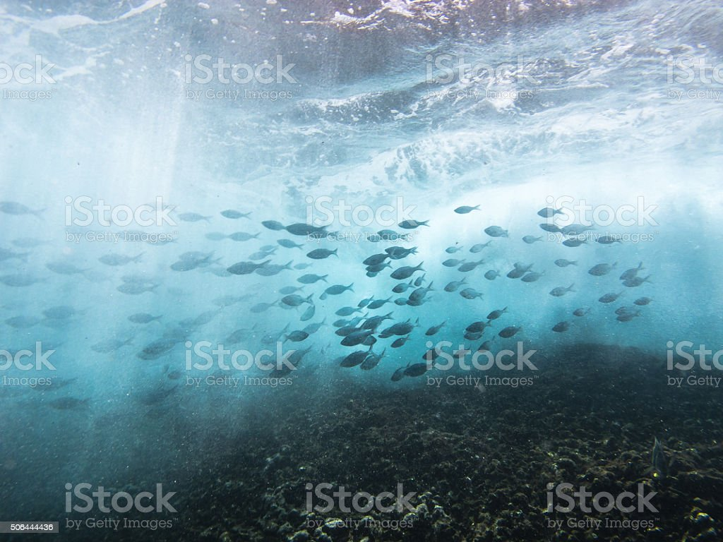 Fish school gracefully swimming in the crashing waves stock photo