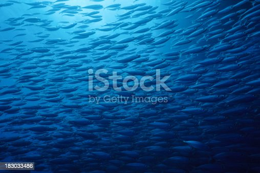 istock Fish School 183033486
