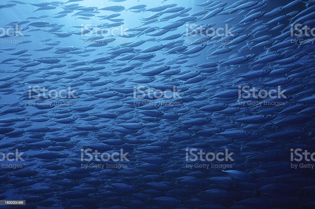 Fish School stock photo