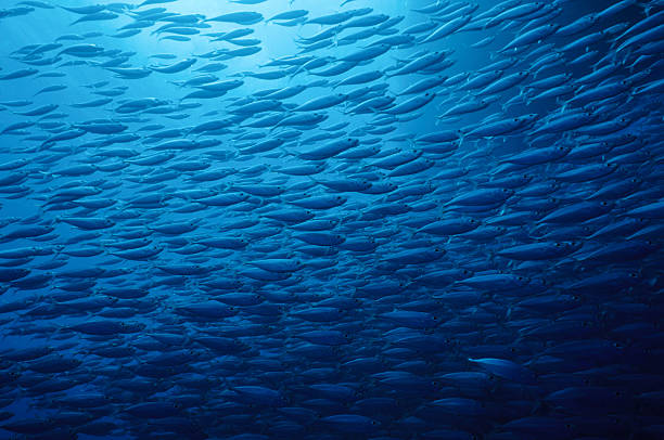 Fisch-Schule – Foto