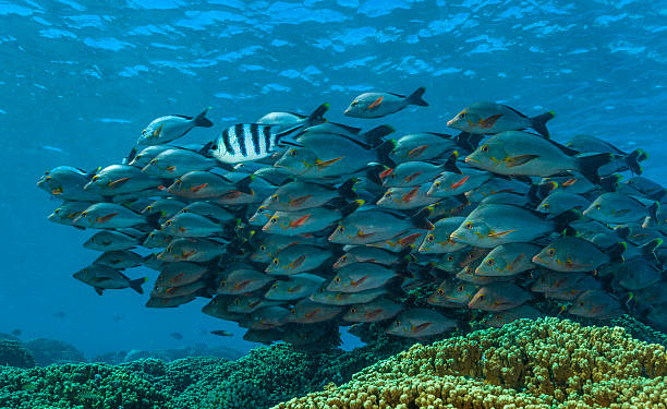 Fish School stock photo