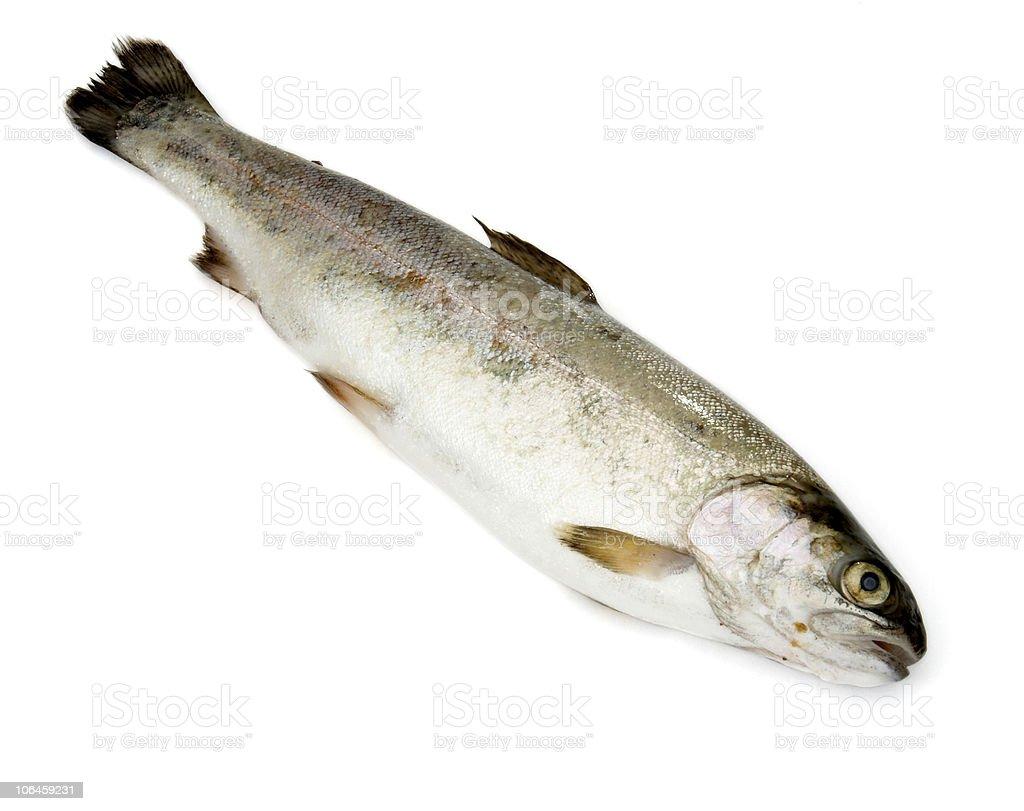 fish sea food nature river stock photo