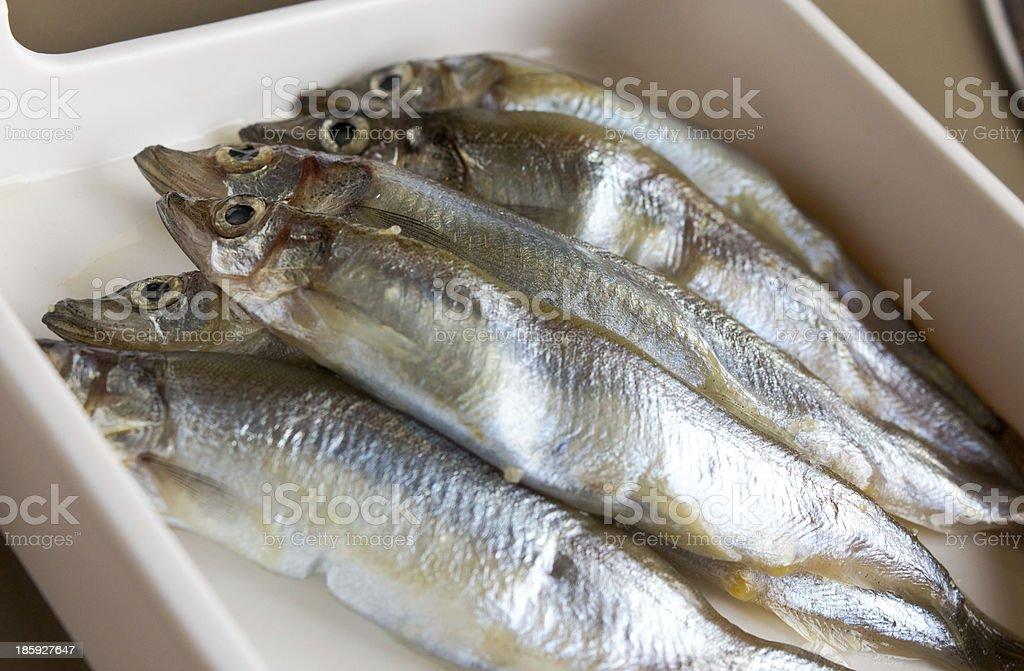 Fish SHISHAMO stock photo