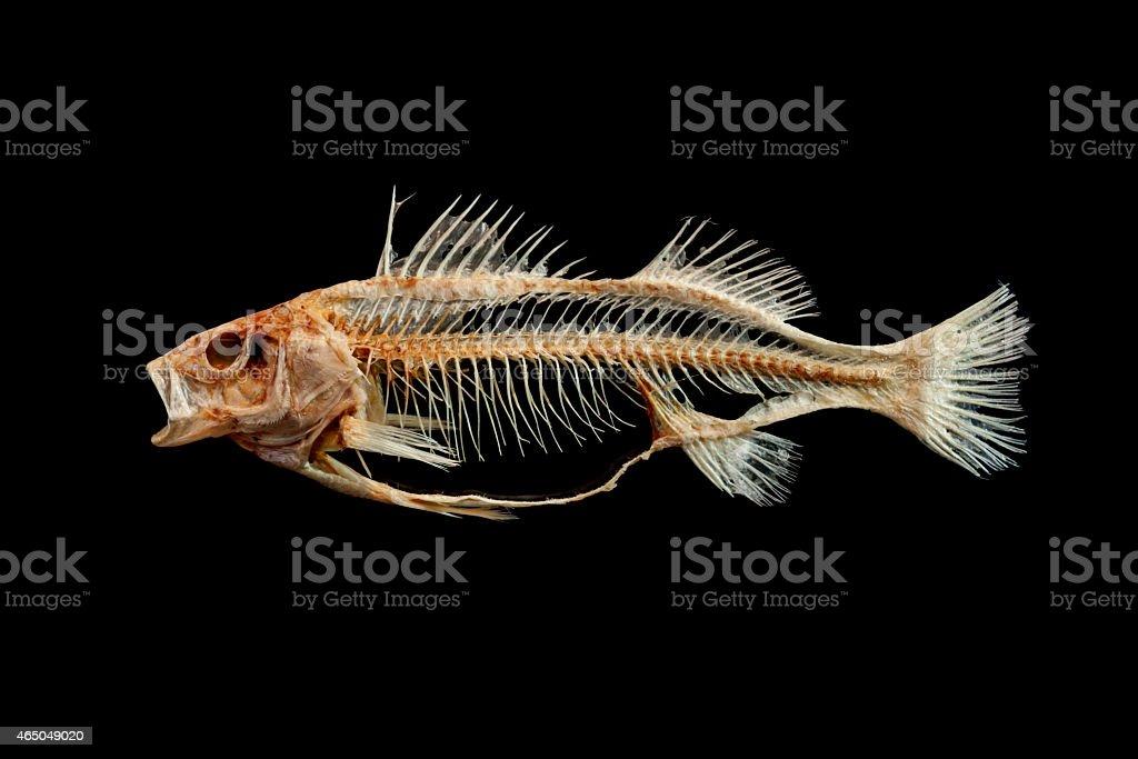 Fish skeleton stock photo