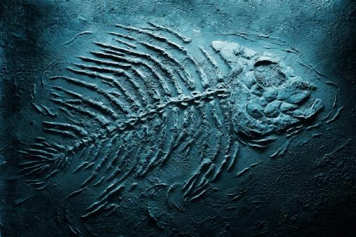 fish skeleton underwater