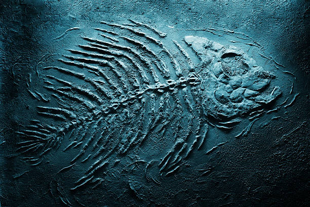 fish skeleton underwater - fossil stock photos and pictures