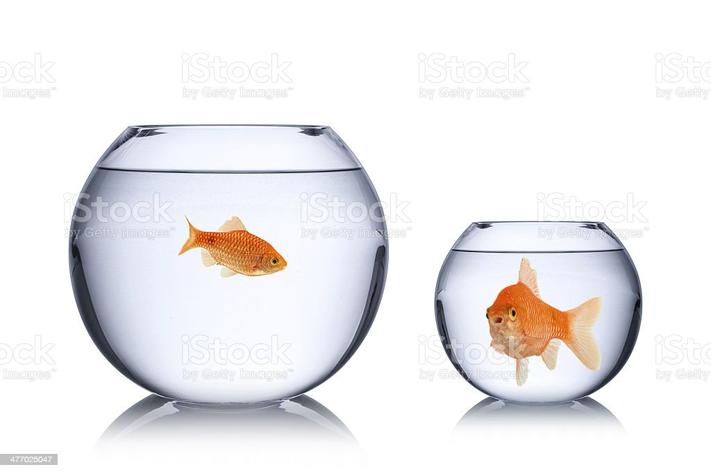 fish social envy concept stock photo