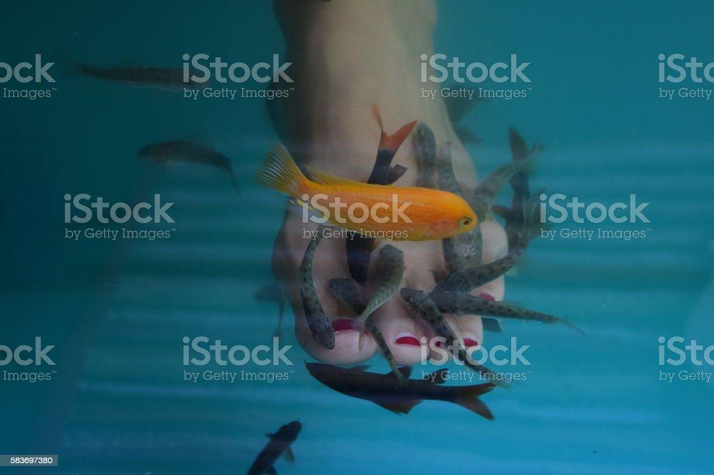 Fish spa eating. stock photo