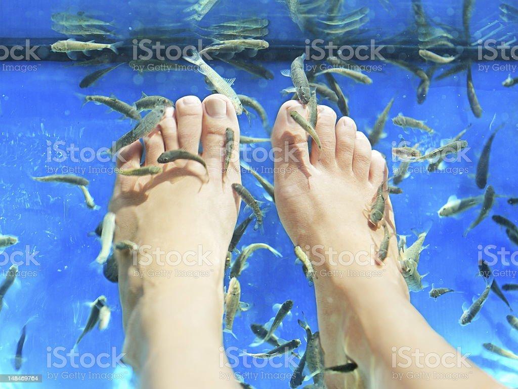 Fish spa pedicure royalty-free stock photo