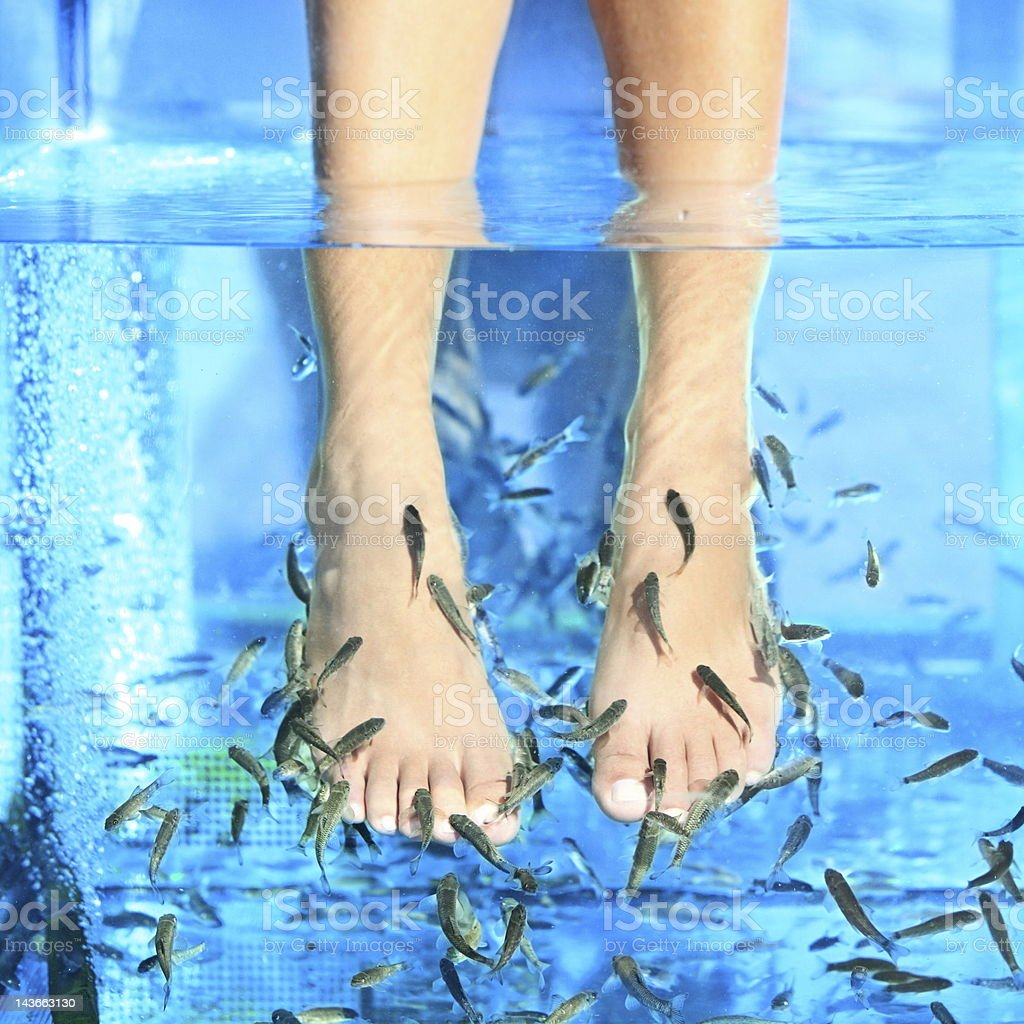 Fish Spa pedicure Rufa Garra stock photo