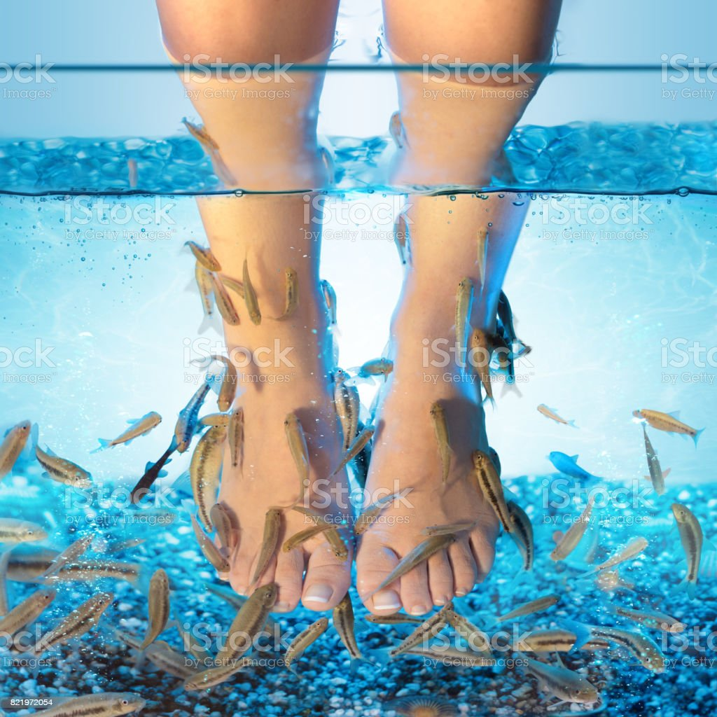 Fish Spa - Pedicure With Rufa Garra stock photo