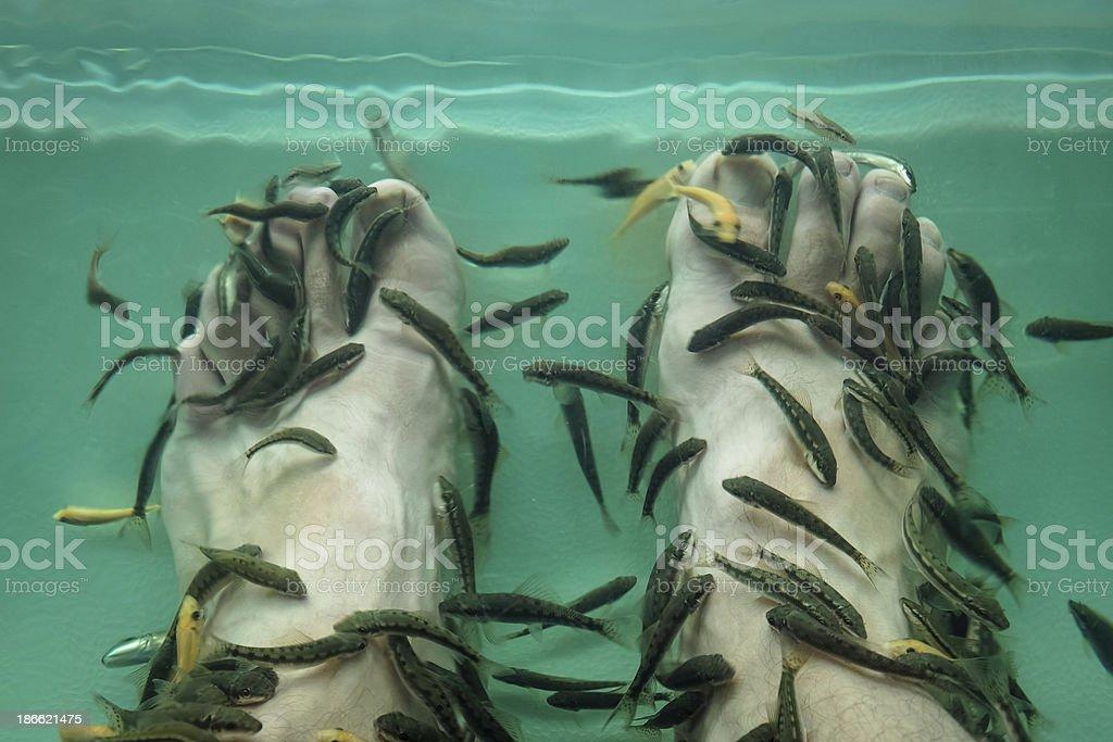Fish Spa royalty-free stock photo