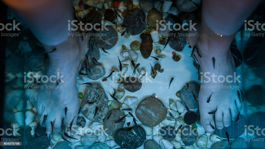 Fish Spa Skin Treatment stock photo