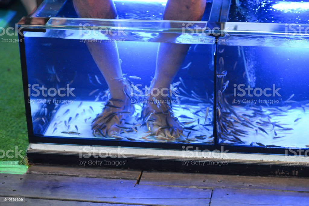 Fish spa therapy by doctor fish stock photo