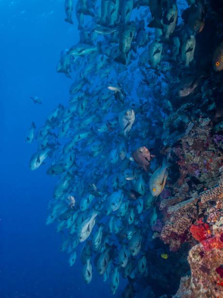 Fish swarm – Foto