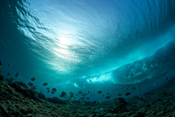 fish swim under a wave - ocean floor stock photos and pictures