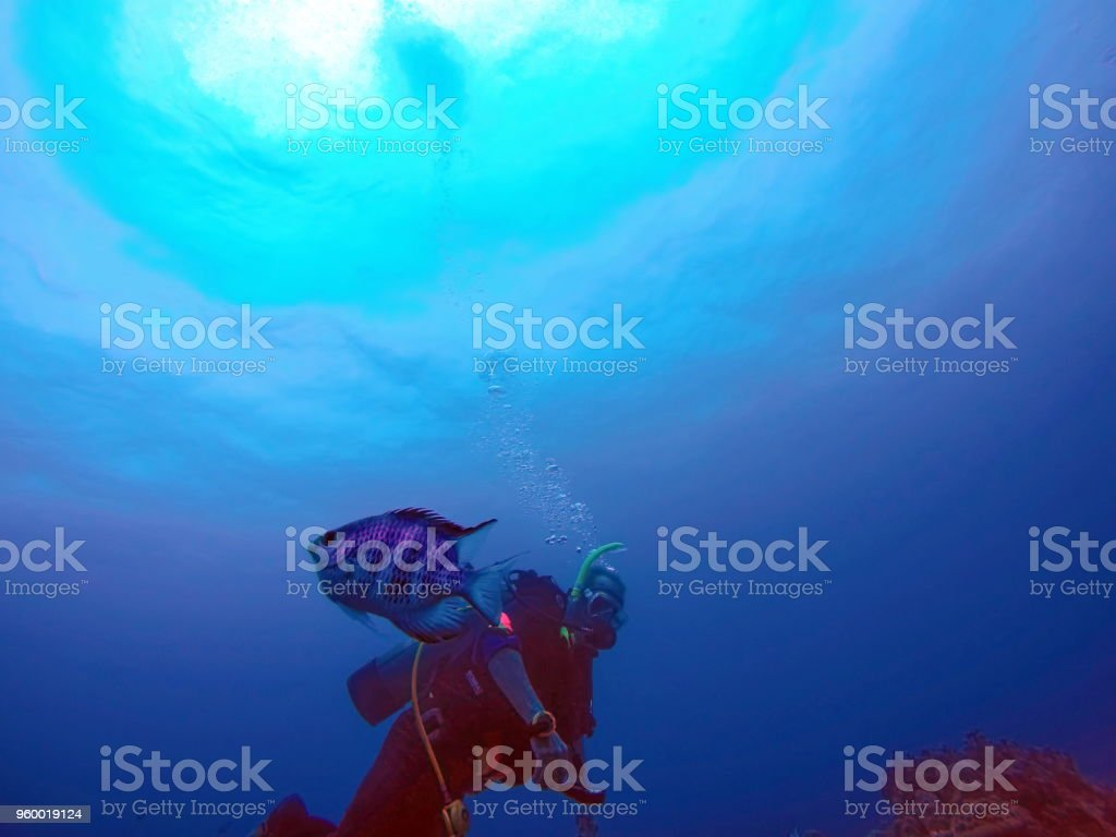 Fish swimming in front of a diver off the coast of Nha Trang stock photo