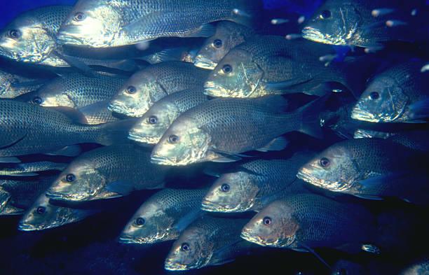 Fische Schwimmen – Foto