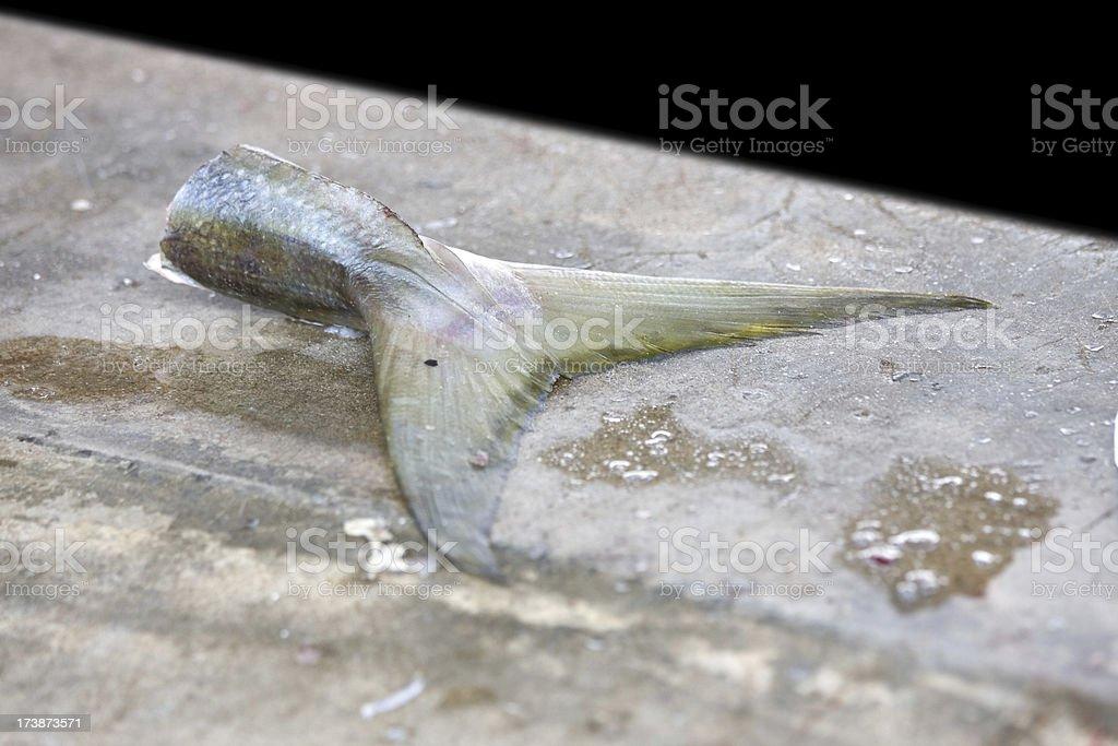 fish tail royalty-free stock photo