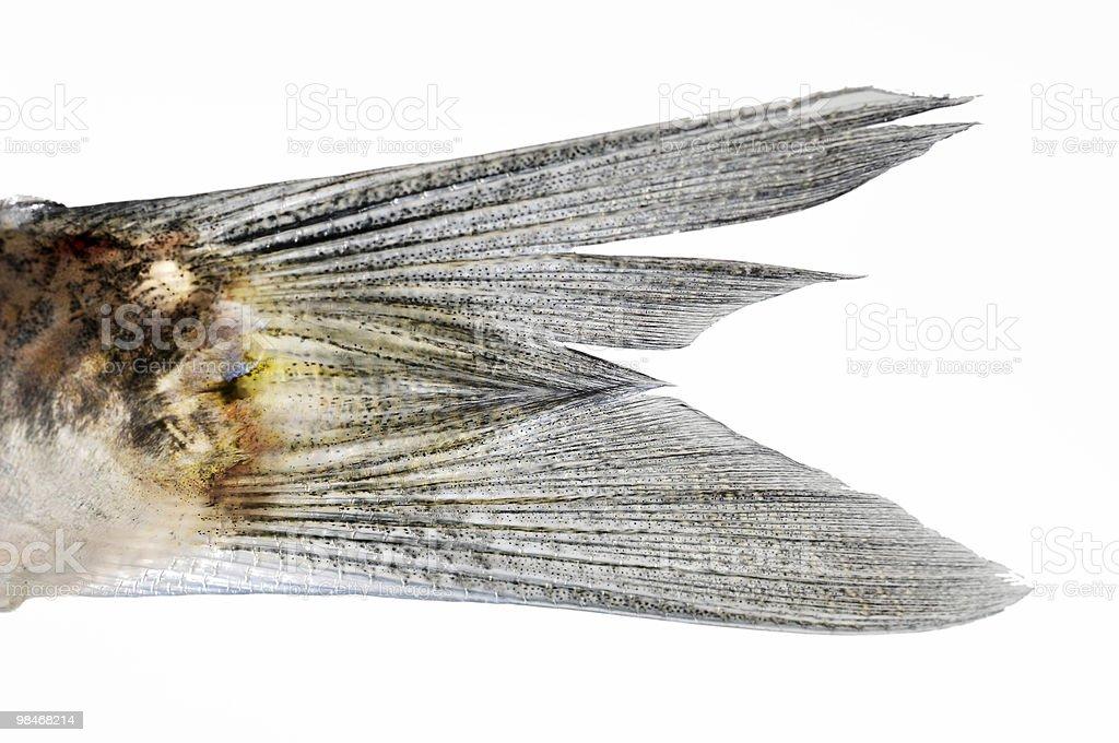 Coda di pesce foto stock royalty-free