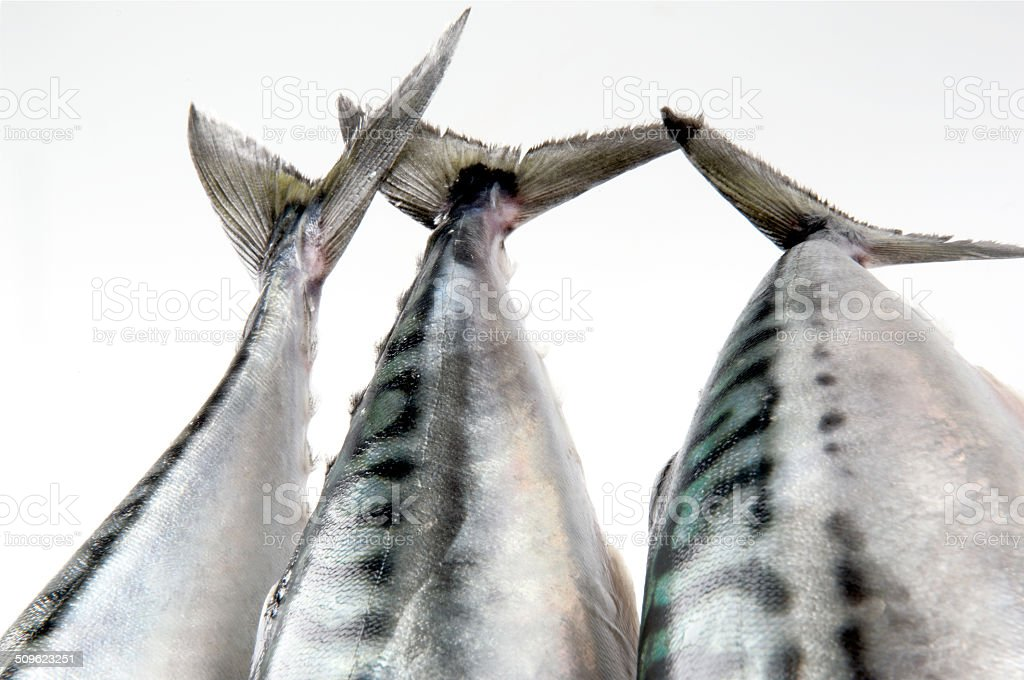 Colas de pescado, caballa stock photo