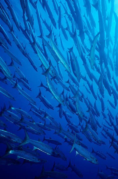Histórias de peixe - foto de acervo