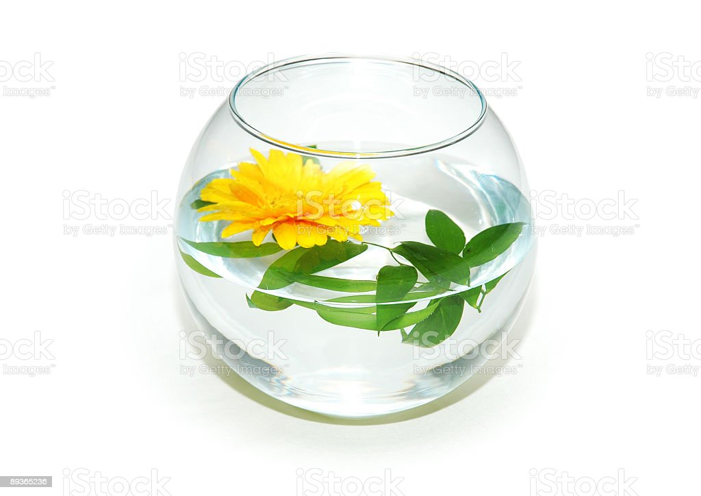 Fish tank and yellow flower isolated on white royalty-free stock photo