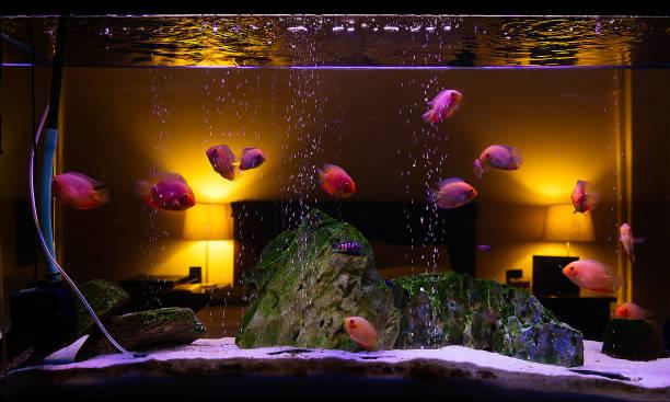 Aquarium Bett - Bilder und Stockfotos - iStock