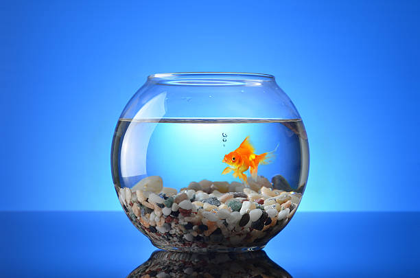 Royalty free fish bowl pictures images and stock photos for Fish stock tank