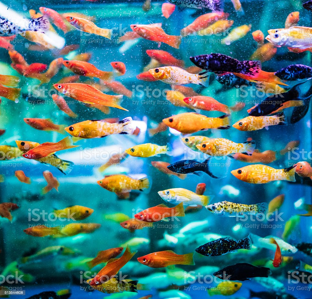 Fish tank with assorted fish stock photo