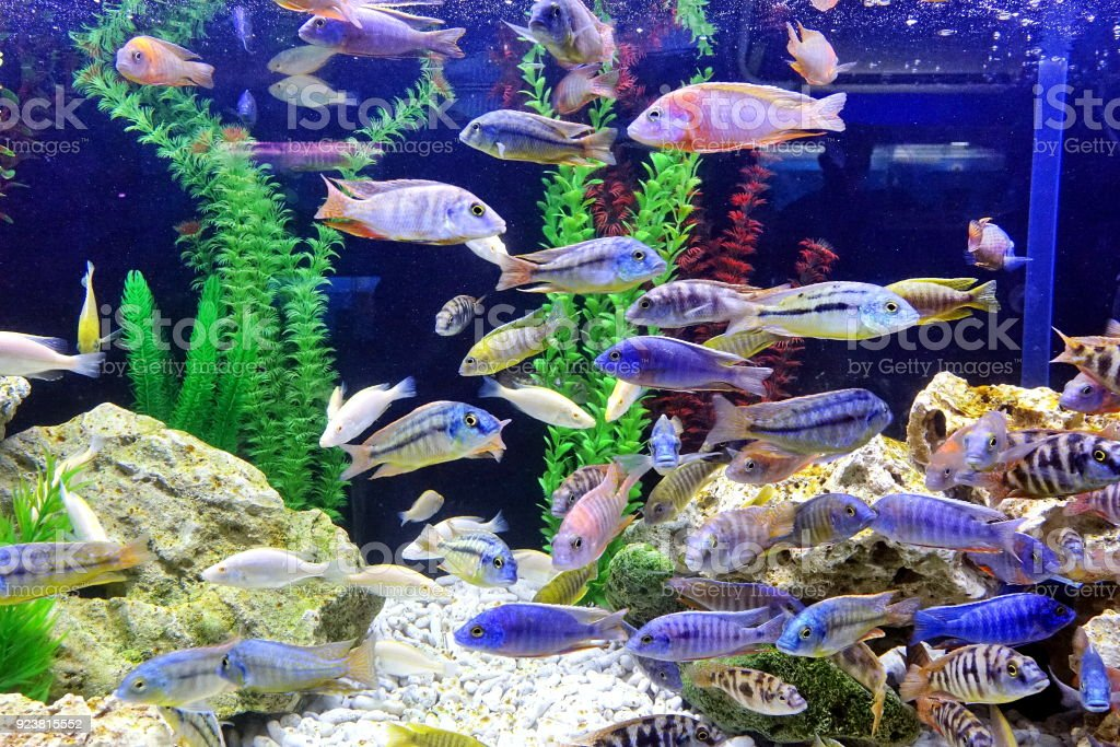 A Fish Tank with Colorful Tropical Fish stock photo