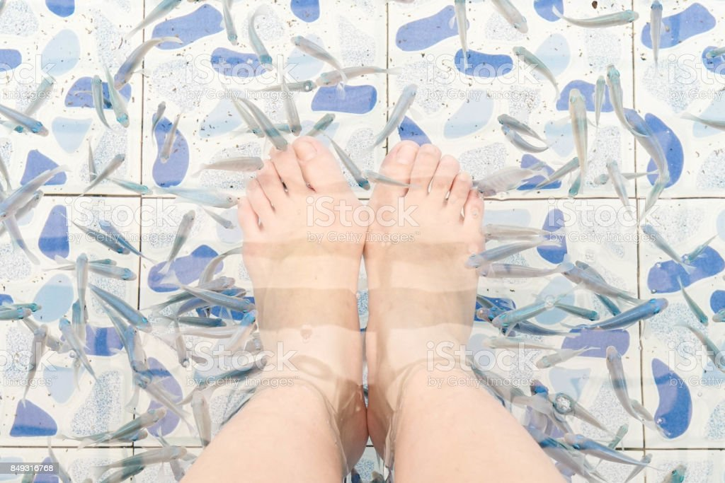 fish therapy (doctor fish) stock photo