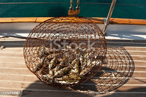 Fish trap on yacht