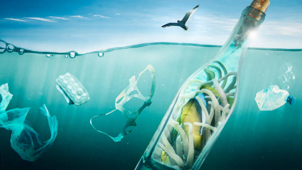 peixe viaja em uma garrafa no mar - organismo aquático - fotografias e filmes do acervo