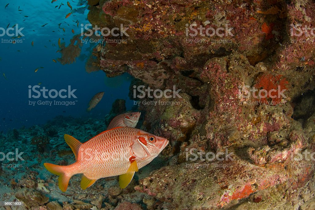 fish under overhang royalty-free stock photo