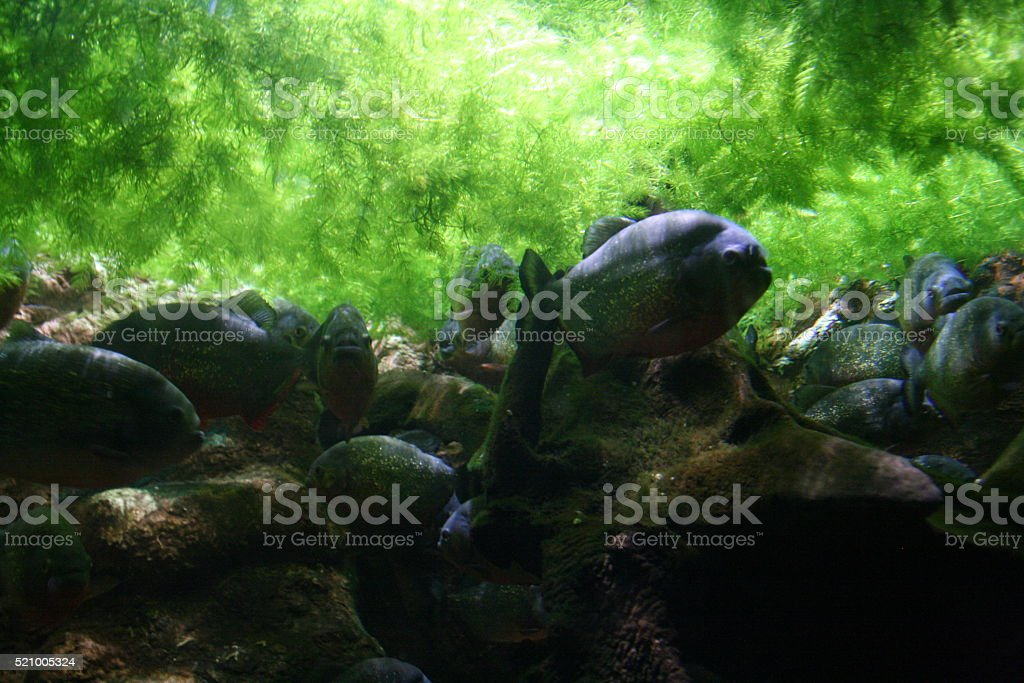 Fish Under Seaweed stock photo