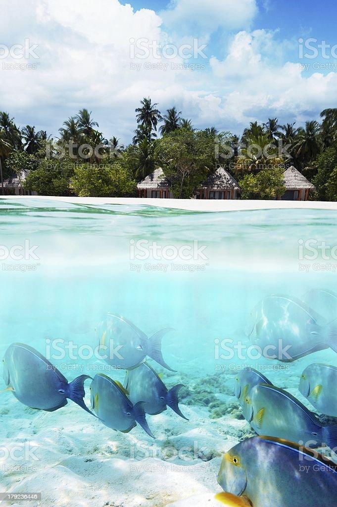 fish under water and beach stock photo