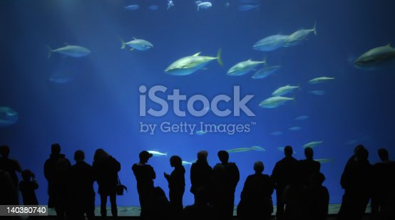 These people are enjoying a school of yellowfin tuna at the Monterey Bay Aquarium.