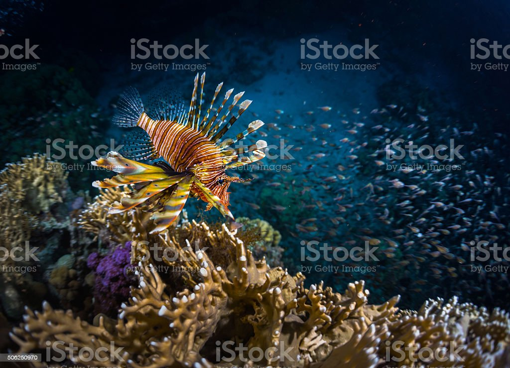 Fish with coral stock photo