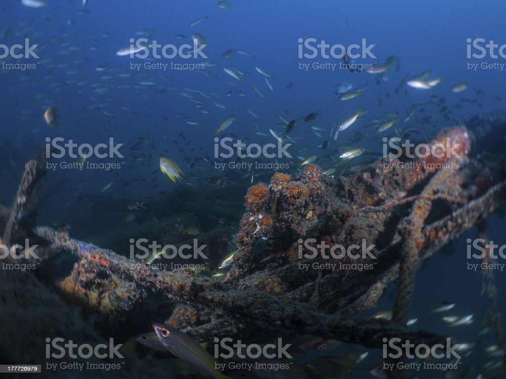 Fish with Wreck royalty-free stock photo