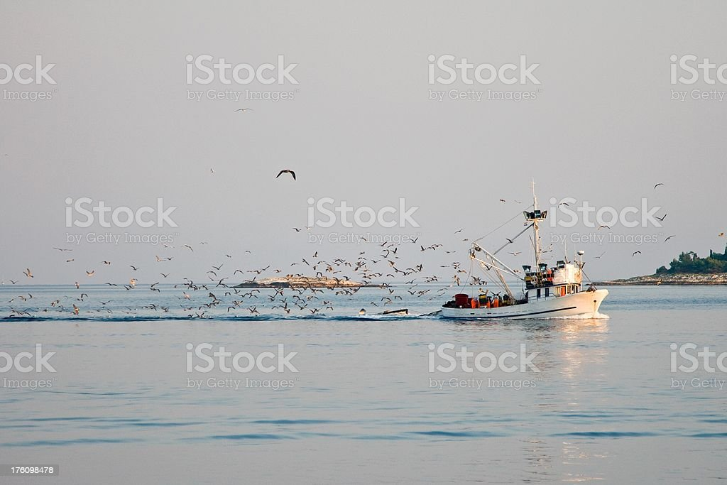 Fishboat with a flock of seagulls royalty-free stock photo