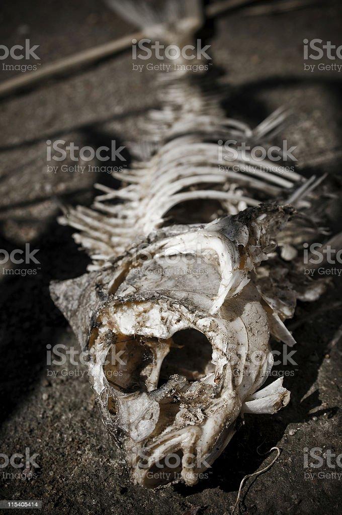 fishbones stock photo