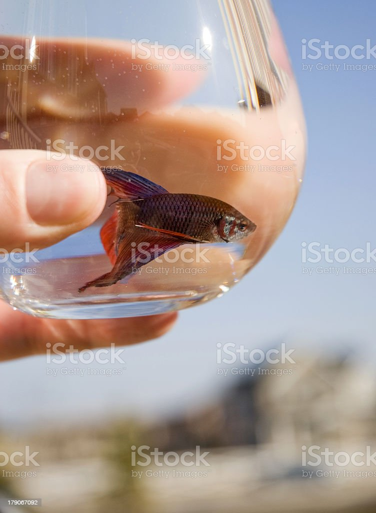 Fishbowl Concept royalty-free stock photo