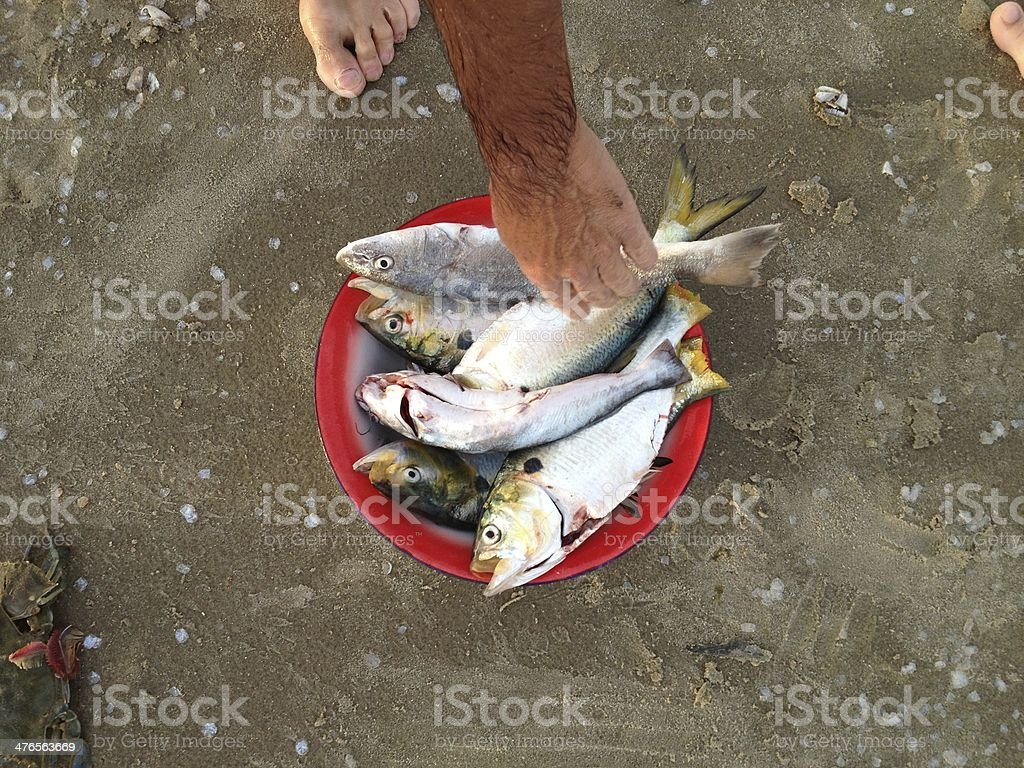 Fished Fish royalty-free stock photo