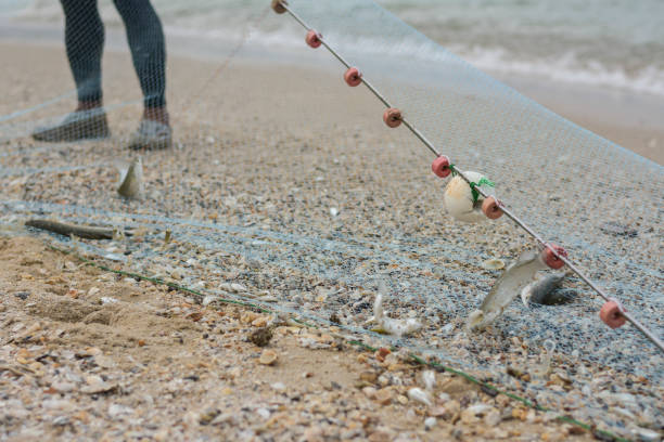 fisher men drag a fishnet into the beach stock photo