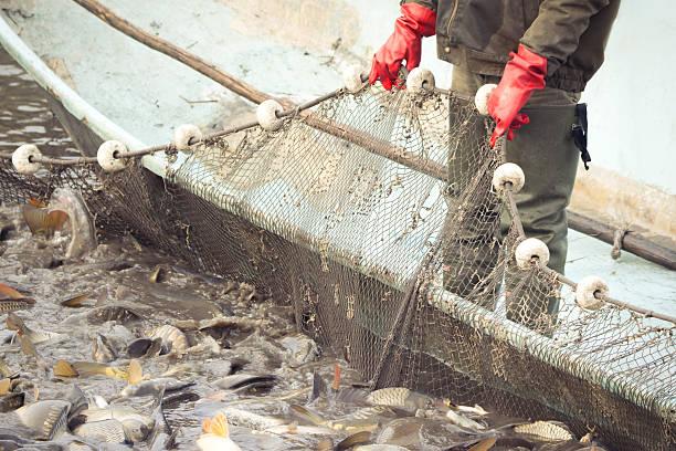 Pescador en el trabajo - foto de stock