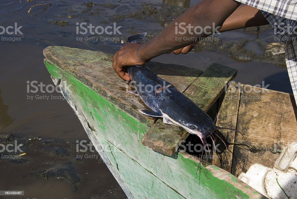 Fisherman cleaning a catfish in his boat royalty-free stock photo