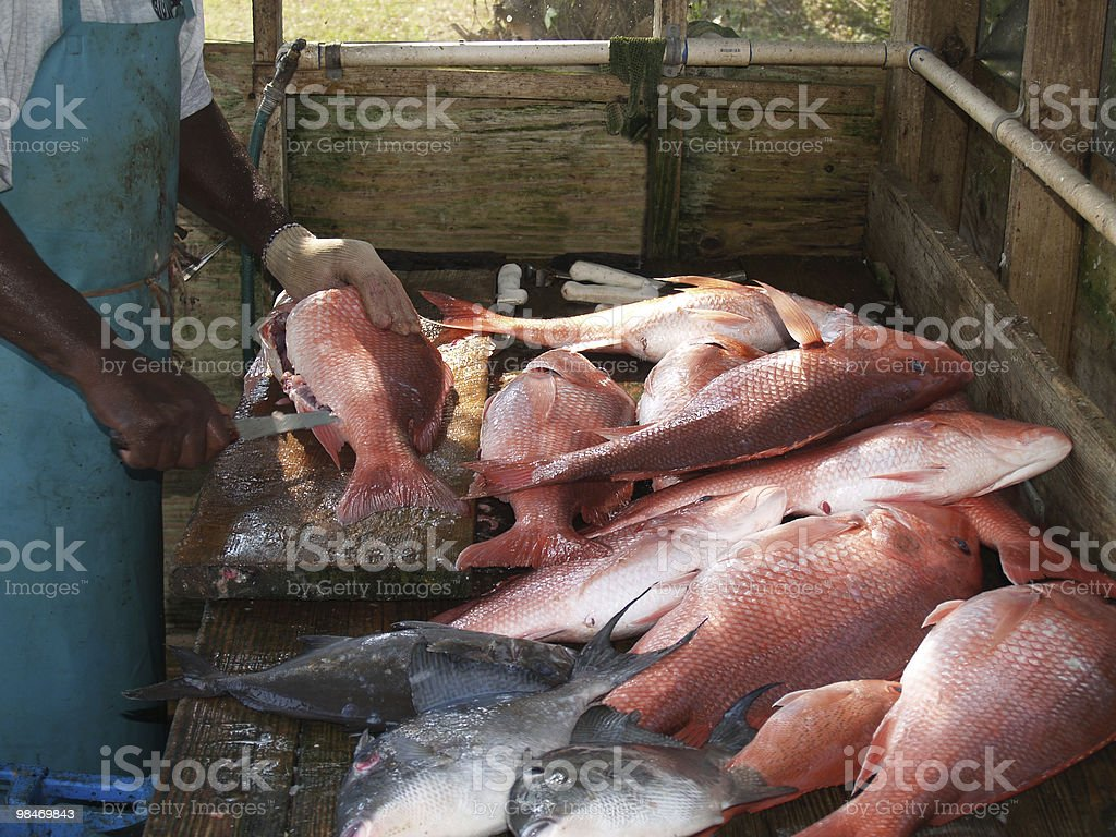 Fisherman Cleaning the Days Catch stock photo